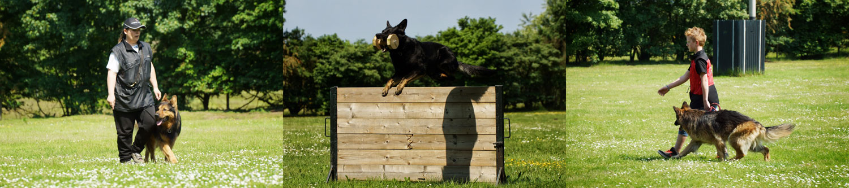 trainen met de hond op Klein Vosdal